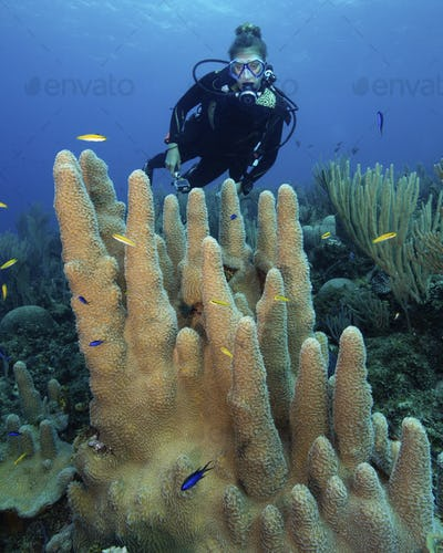 Reef scene with scuba diver swimming over a  Pillar coral.