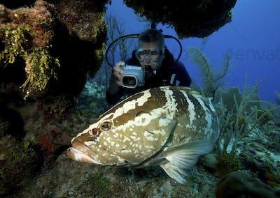 Underwater photographer and Nassau grouper (Epinephelus striatus), Bloody Bay, Little Cayman.  The