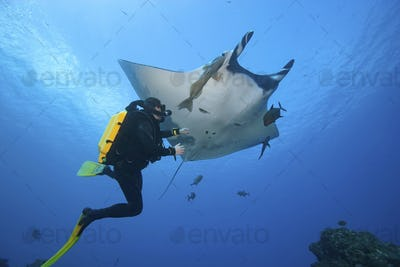 Diver with Manta ray, Mexico.