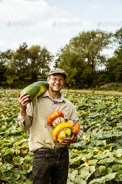 Smiling farmer standing in a field, holding selection of freshly harvested pumpkins.
