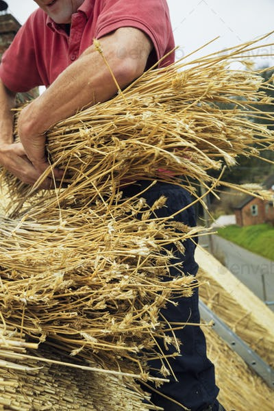 Close up of a thatcher on a roof, holding a yelm of straw.