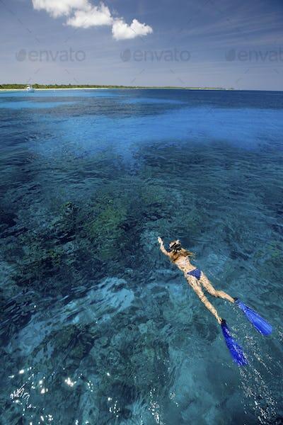 Snorkeler,  near Bloody Bay Wall
