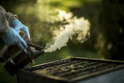 Close up of beekeeper wearing gloves and using a smoker on an open beehive to calm honeybees.