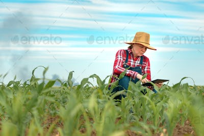 Concerned female farmer with tablet in corn field looking at black smoke on horizon