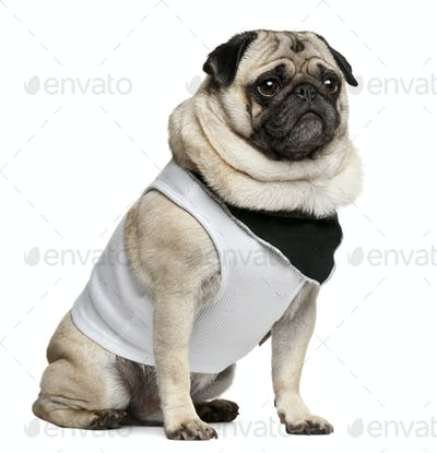 Pug, 4 years old, dressed up and sitting in front of white background