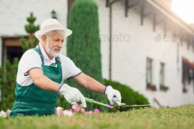 Senior man cutting overgrown bushes