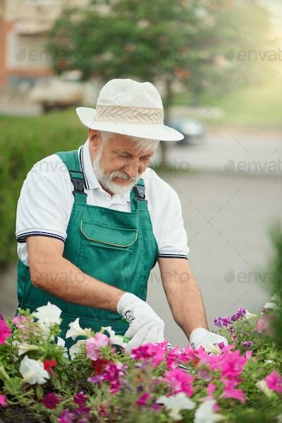 Senior gardener pruning flowers outdoors