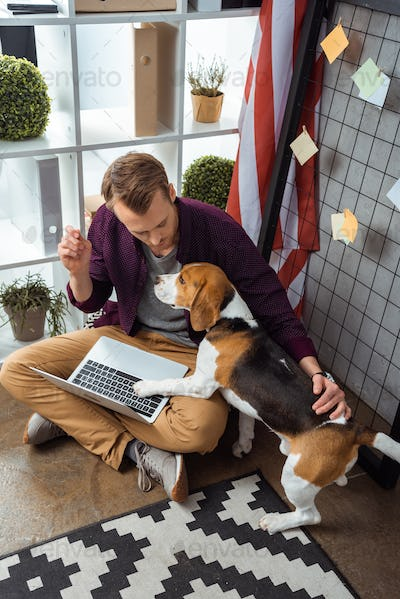 High Angle View of Young Male Freelancer With Laptop Touching Beagle Near Usa Flag in Home Office
