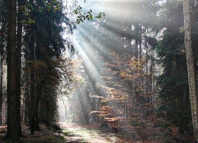 God beams - sunbeams in the morning forest