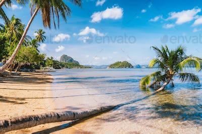 Sandy Beach with fallen palm tree on corong beach, El Nido, Palawan, Philippines