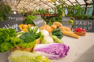 Organic food counter