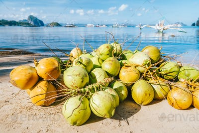 Many fresh coconut fruits on the corong beach in El Nido, Palawan, Philippines