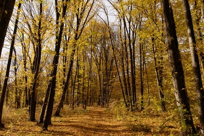 Scenary autumn forest road