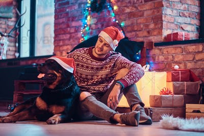 Young man sitting with his purebred rottweiler in a decorated living room at christmas time.