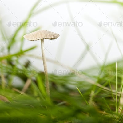 Mushroom in grass in front of white background
