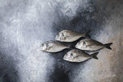 Fresh uncooked Dorado or sea bream fish