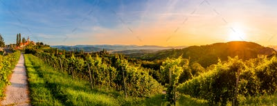 Landscape panorama of vineyard on an Austrian countryside with a church in the background in Kitzeck