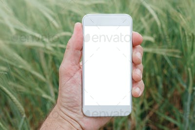 Mock up smartphone screen in barley field