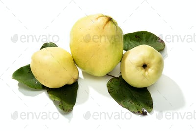 popcornFresh Quince fruit isolated on white background