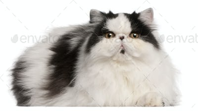 Persian Harlequin cat, 6 months old, lying in front of white background