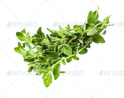 bundle of fresh Oregano herb isolated on white