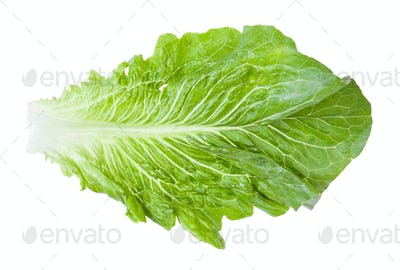 green leaf of Romaine lettuce isolated on white