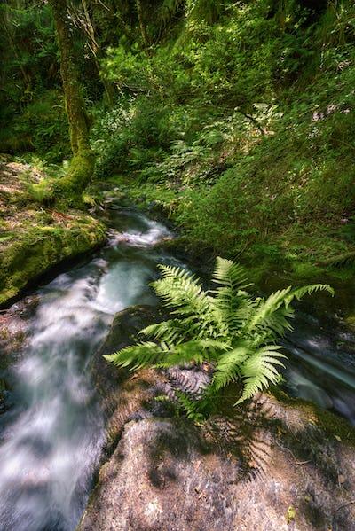 Lush Fern next to a Rushing Water Stream