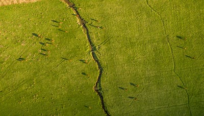 Argentine Chilean Patagonian landscape with freely grazing cows. Aerial wiew of group of cows in
