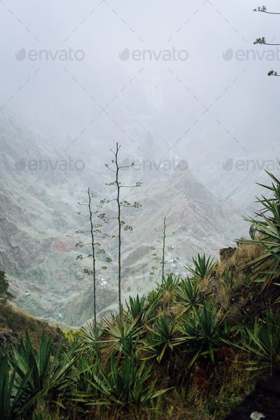 Cape Verde. Moody yucca plants with desolate rocky mountain background in Xo-xo valley in Santo