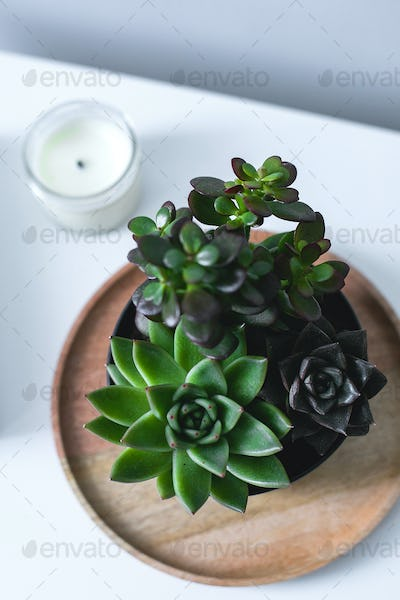 Tiny succulents and candle on bedside table in the bedroom in scandinavian style home