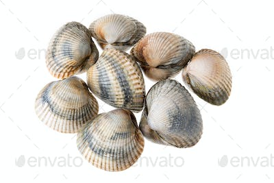 Fresh Cockles isolated on white background