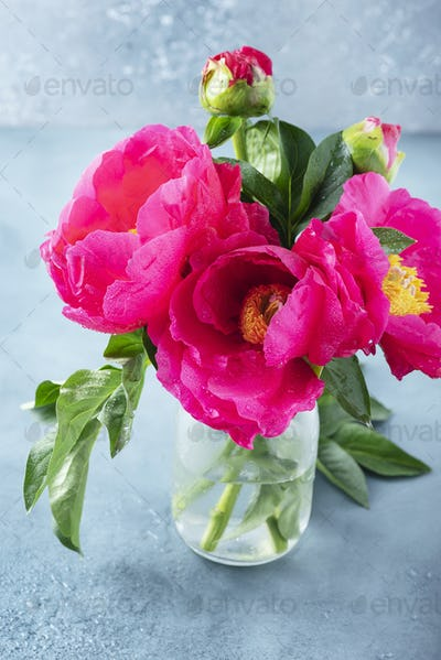 Peony Madame Butterfly