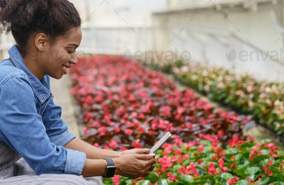 Plantation of flowers in greenhouse. African american girl photographs plants