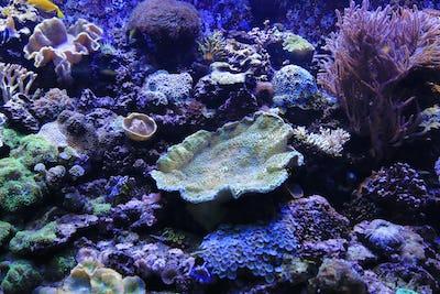 Beautiful colorful marine life