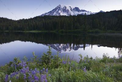 Mount Rainier, a snowcapped peak in Washington, USA