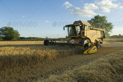 A combine harvester driver working in a field, harvesting a cerial crop.