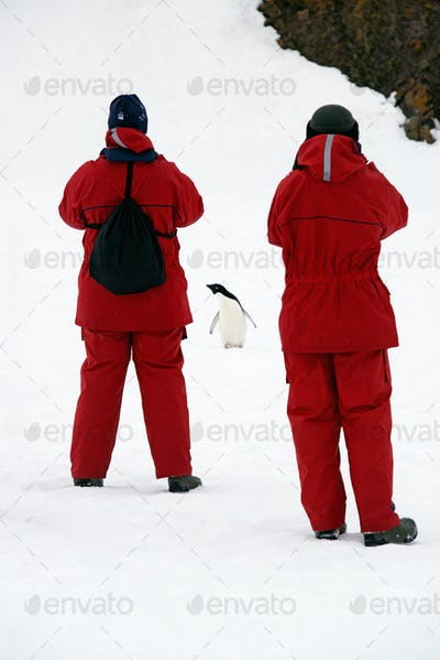 Two people in bright orange waterproofs observing and photographing a chinstrap penguin.
