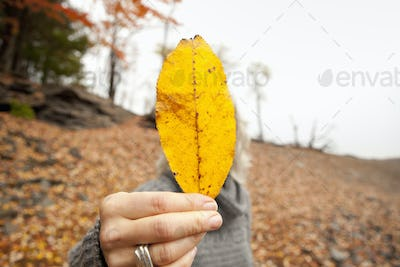 A woman holding out an autumn leaf obscuring her face.