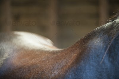 A bay horse. The neck, withers and curve of the back.