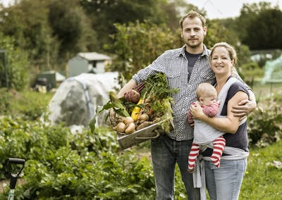 Young family in their allotment, man holding box of freshly picked vegetables,