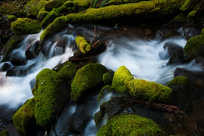Barnes Creek with water flowing over mossy rocks in Olympic National Park, Washington, USA