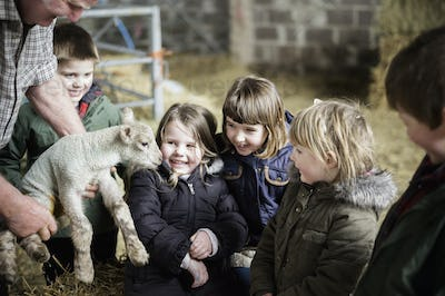 Children and newborn lambs in a lambing shed.