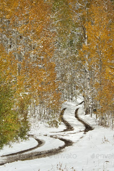 A road in the Uinta Mountains, with light snow on the ground.