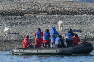 Female polar bear with a cub on a beach walking towards a Zodiac with passengers.