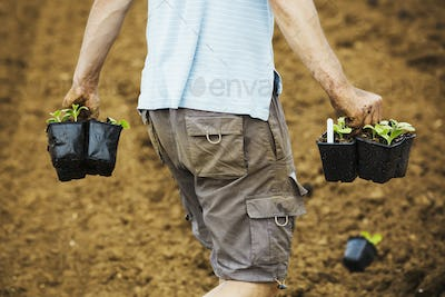 A man walking across a field carrying plant pots full of seedlings.
