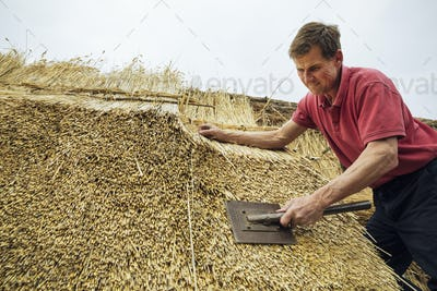 Man thatching a roof, dressing the thatch using a leggett.