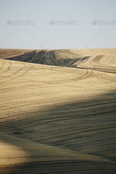 Harvested wheat field  and rolling hills, Palouse, Washington