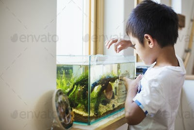 Family home. A boy feeding the fish in a tropical fish tank on a windowsill.