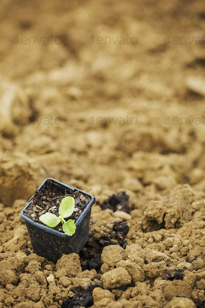 A seedling in a plant pot on top of soil.