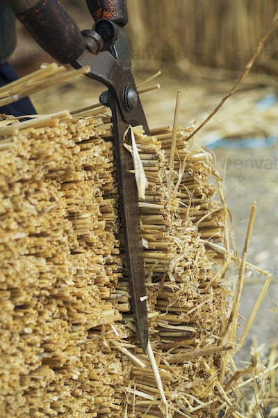 Close up of a thatcher cutting a yelm of straw with a pair of shears.